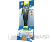 TETRA DECOART PREMIUM HAIRGRASS ROŚLINA DO AKWARIUM